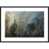Global Gallery Frost Crystal Patterns on Glass, Ross Sea, Antarctica by Colin Monteath - Picture Frame Photograph Print on Paper Paper | Wayfair