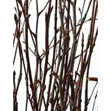 Green Floral Crafts - Natural Birch Branches 2-3 Feet Tall, Pack of 12