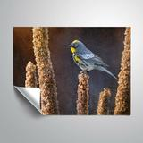 Winston Porter Joyner Warbler on Brown Removable Wall Decal Vinyl in White, Size 36.0 H x 48.0 W in | Wayfair B329724675EE44A2A66C0D45EA7ACE93