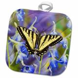 3dRose Male Western Tiger Swallowtail Butterfly Papilio Rutulus 02 Potholder Polyester/Cotton in Blue/Indigo/Yellow, Size 10.0 W in   Wayfair