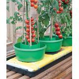 TDI Brands Gardening Tools - Green Plant Halo - Set of Three