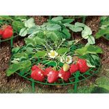 Zenport Fruit & Vegetable Supports, Size 12.0 H x 12.0 W x 4.0 D in | Wayfair P-309