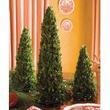 Napa Home & Garden Floral - Mini Boxwood Tree Set