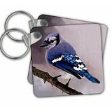 3dRose Jay Key Chain in Blue, Size 2.25 H x 2.25 W x 0.16 D in   Wayfair kc_606_1