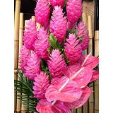 Hawaiian Exotic Flower Plant Roots - Bamboo Orchids - Hibiscus - Ginger -Ti Logs (Pink Ginger Root)