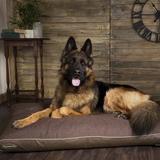 Scruffs Hilton Memory Foam Pillow Dog Bed, Chocolate, Medium