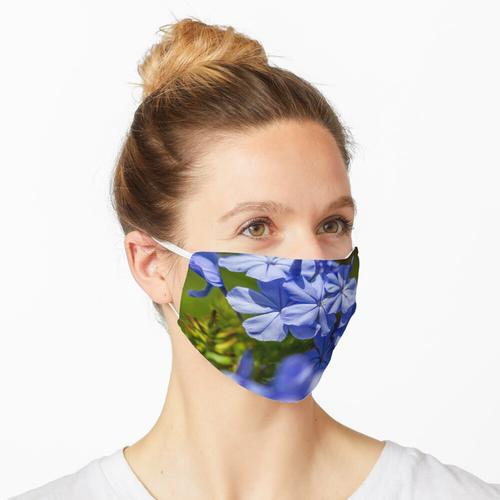Bleiwurz, blaue Schönheit Maske
