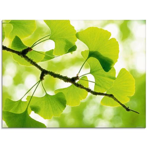 Artland Glasbild »Ginkgo«, Blätter (1 Stück)