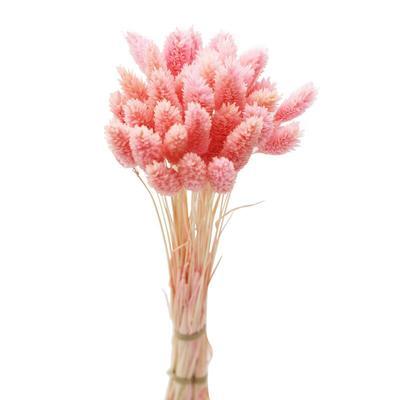 Bouquets de fleurs de Phalaris, ...