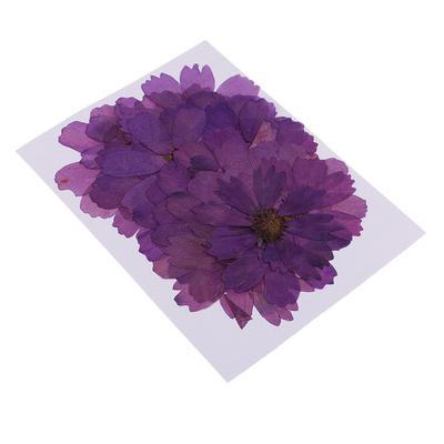 Lot de 20 vraies fleurs séchées,...