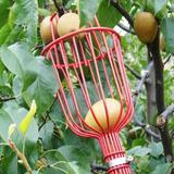 Tête de cueillette de fruits, ou...