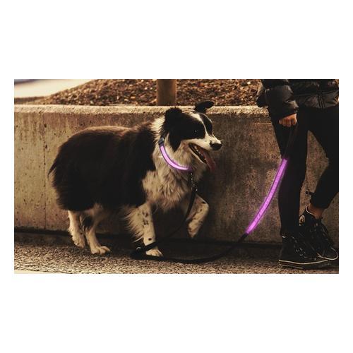 Leuchtendes Hundehalsband: Hundehalsband/ 1x Grün/ L