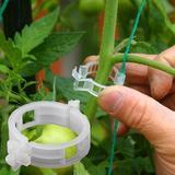 Clips de Support pour plantes à ...