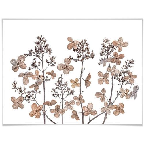 Wall-Art Poster »Getrocknete Blumen«, Blumen (1 Stück)