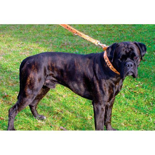 HEIM Hunde-Halsband Buffalo, Echtleder braun Hundehalsbänder Hund Tierbedarf