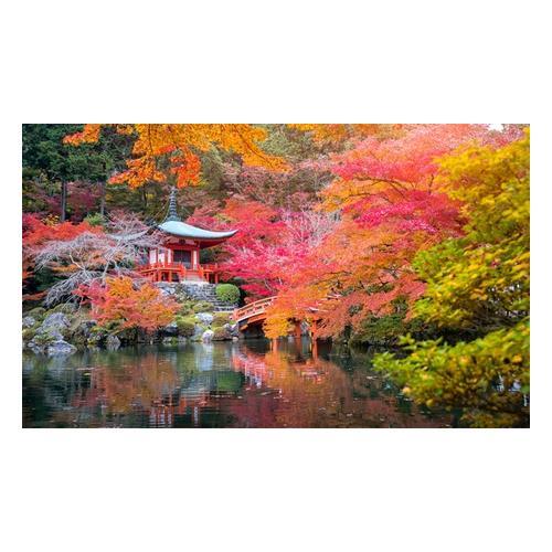 japanische Ahorne: 4