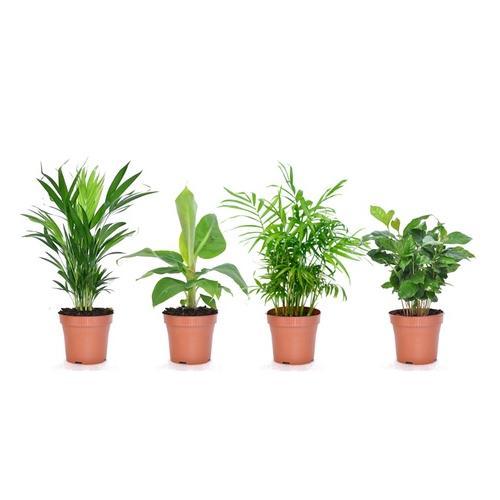 4er-Set Zimmerpflanzen