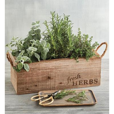 Herb Garden In Wooden Box